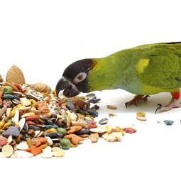 Bird Vitamins & Minerals