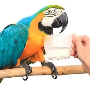 Bird Supplements