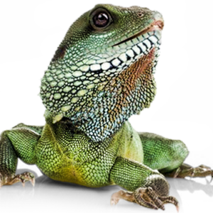 Reptile Products