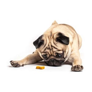 Dog Treats and Chews