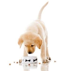 Puppy Start-up Kit