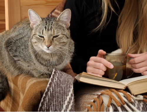 Pets Help To Relieve Exam Stress