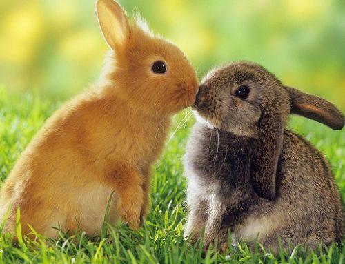 Rabbit Care- Feeding