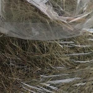 Eragrostis Hay -1kg